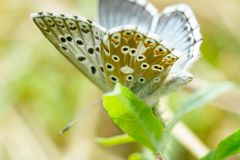 Close up of a colorful butterfly Royalty Free Stock Photography