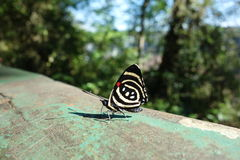 Close up of colorful butterfly Royalty Free Stock Photo
