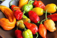Close up of Colorful Chili Peppers Stock Photo