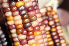 Close-up of colorful dried Indian Corn as decoration stock photo