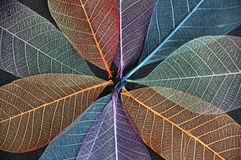 Close up Colorful Dried Leaves Background Stock Photography