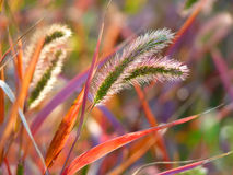 Close-up colorful ears and grass Royalty Free Stock Image