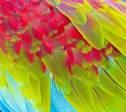 Close up of colorful feathers Royalty Free Stock Photos