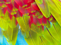 Close up of colorful feathers. Of macaw bird stock image