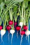 Close up of colorful fresh radishes Stock Images