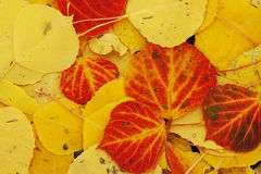 Close up of colorful leafs Stock Photos