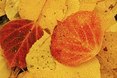 Close up of colorful leafs Royalty Free Stock Image