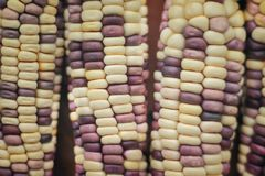 Colorful multicolored corn texture nature for background royalty free stock photography