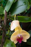 Close up of colorful orchid plants Royalty Free Stock Images