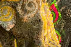 Close up of colorful painted elephant head Stock Image