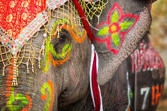 Close up of colorful painted elephant head Royalty Free Stock Photography