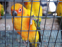 Close up colorful parrot Stock Image