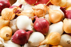 Close Up Of Colorful Pearl Onions Royalty Free Stock Photos