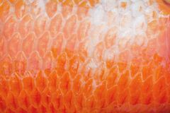 Colorful red koi fish scales texture or carp patterns , nature animal skin background