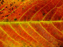 Close up of colorful textures leaf colors Royalty Free Stock Photography