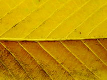 Close up of colorful textures leaf colors Royalty Free Stock Photo