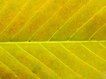 Close up of colorful textures leaf colors Royalty Free Stock Image