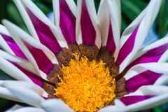 Colorful wild flowers. Close up of colorful, wild flowers in full bloom stock images