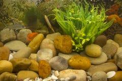 Close up coloridamente de peixes no aquário imagens de stock