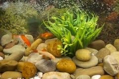 Close up coloridamente de peixes no aquário foto de stock