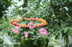 Close up colorido de alimentar os animais, borboleta no jardim fotografia de stock
