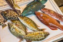 Close up of colourful fish at fish market Stock Photography