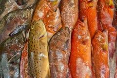 Close up of colourful fish at fish market Royalty Free Stock Photography