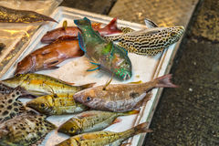 Close up of colourful fish at fish market Stock Images