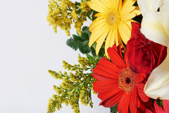 Close up colourful flowers Royalty Free Stock Photo