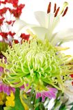 Close-up of colourful summer flowers mix. Close-up of colorful summer flowers mix isolated on the white Royalty Free Stock Photo