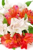 Close-up of colourful summer flowers mix. Royalty Free Stock Images