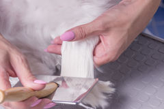 Close up comb brushing dog hair fur. Hand. Motion blur Stock Photos
