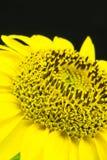Close up of composite flower Stock Photos