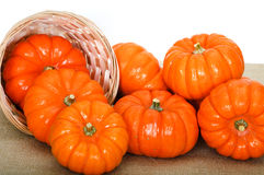 Close up composition of pumpkins. Stock Image