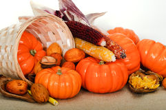 Close up composition of pumpkins, nuts and corns Royalty Free Stock Images