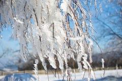 Close up congelado dos ramos Fotografia de Stock
