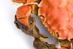 Close up of a cooked crab Stock Photography