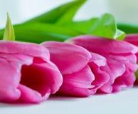 Close-up cor-de-rosa bonito de três tulipas imagem de stock