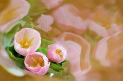 Close up cor-de-rosa das tulipas empacotado fotografia de stock