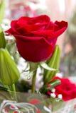 Close up cor-de-rosa do vermelho Imagens de Stock Royalty Free