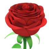 Close up cor-de-rosa do vermelho isolado no fundo branco Imagem de Stock Royalty Free