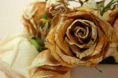 Close up cor-de-rosa secado Fotografia de Stock