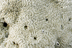 Close up Coral fossil Stock Photos