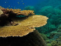 Close up of Coral on Great Barrier Reef Australia Stock Images