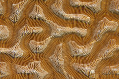 Close up coral,roatan,honduras background texture Royalty Free Stock Images
