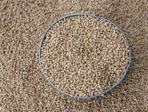 Close up, coriander seeds. Heap in bowl top view surface Royalty Free Stock Images