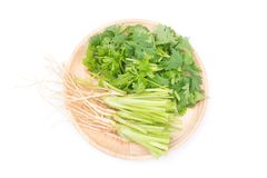 Close up Coriandrum sativum roots isolated on white background. Coriandrum sativum roots is an important spice for Thai cooking stock image