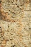 Close-up of cork bark Royalty Free Stock Photos