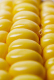 Close up of corn Royalty Free Stock Images