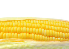 Close up of corn as background Stock Images